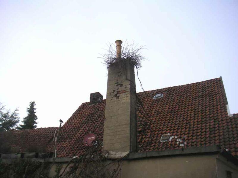 Hausschmuck in der Innenstadt - Vogelnest auf einem Schornstein