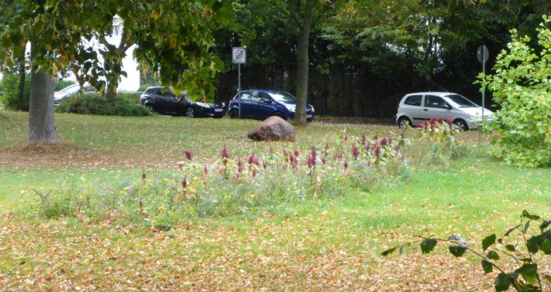 Blühstreifen auf dem Platz der Deutschen Einheit