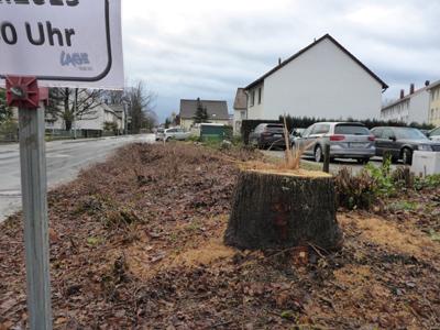 Baumfällungen an der Pottenhauser Straße - für Straßenerneuerung mit Rad- und Fußweg
