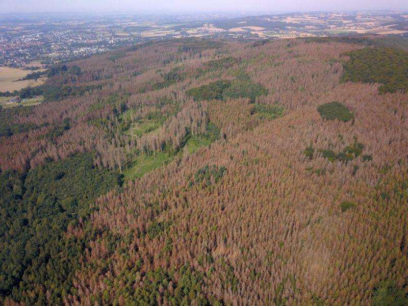 Große Schäden im Stadtwald Lemgo