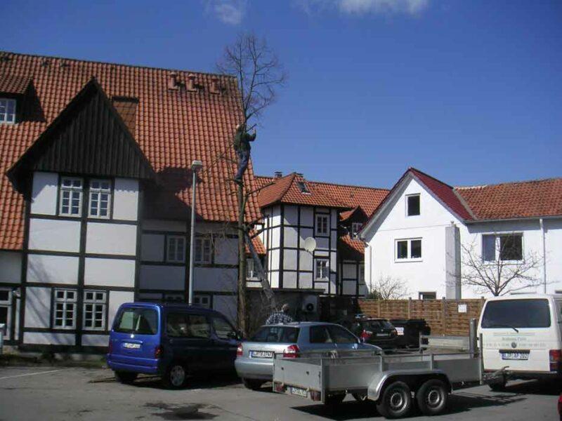 Baum am Parkplatz 'Brinkmannsches Haus' wird gefällt