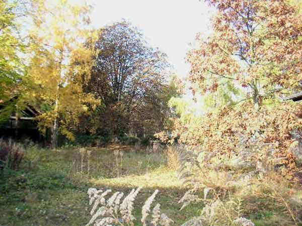 Naturwildnis in der Innenstadt - Heute Lidl-Rossmann-Gelände