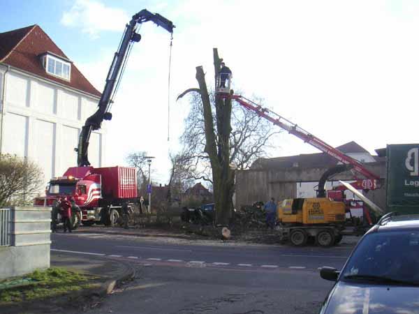 Ein großer Baum neben dem Technikum wird gefällt - viel Technik im Einsatz