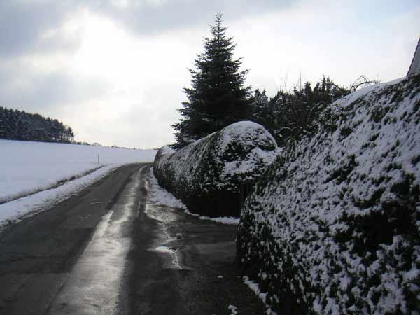 Riesige Hecke mit Schnee - Lönsweg