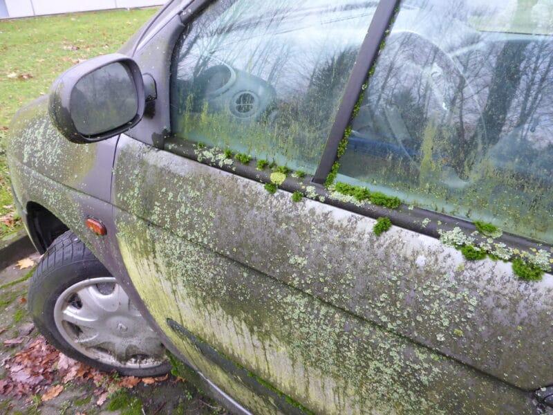 Bemosstes Auto - Die Natur kehrt zurück