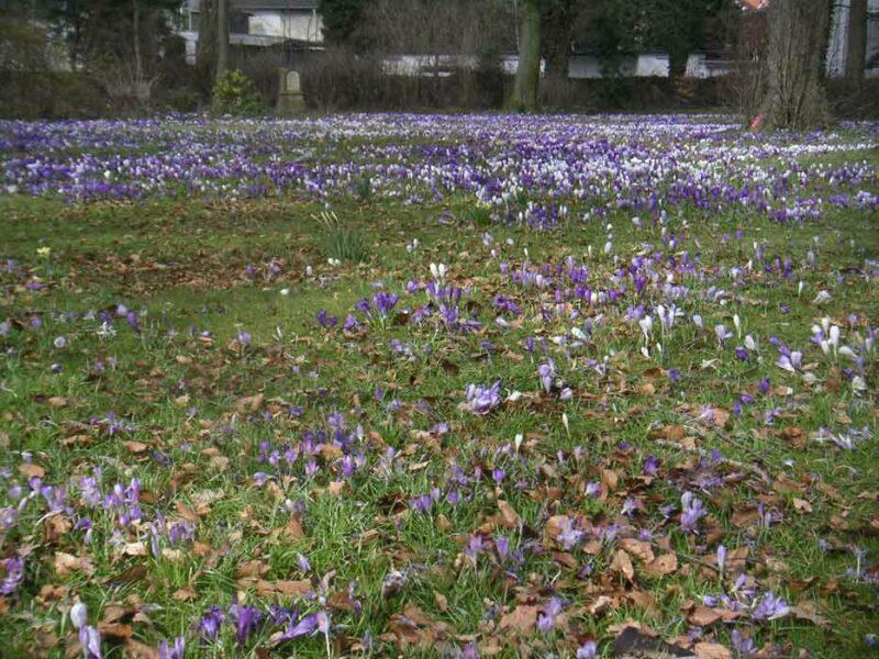 Krokussblüte im Friedenspark