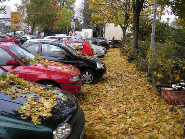 Herbstblätter in der Innenstadt