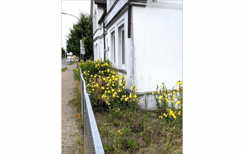 Blumen in verlassenem Vorgarten