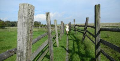 Weg zwischen Weidezäunen in Lage-Müssen